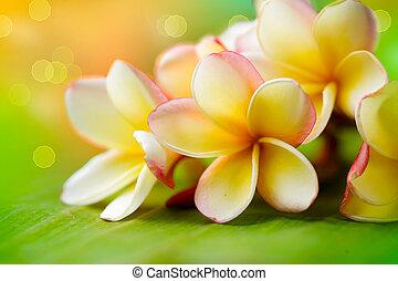 exotique, flower., frangipanier, peu profond, dof, plumeria...
