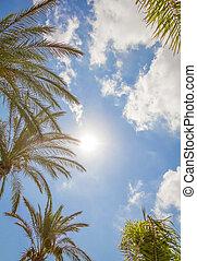 exotique, fond, de, palmiers, sur, a, ciel bleu