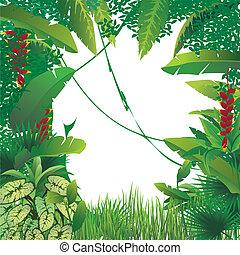 exotique, forêt tropicale