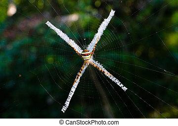 exotique, formulaire, araignés, multicolore, cross., toile araignée