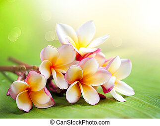 exotique, frangipanier, plumeria, flower., spa