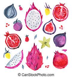 exotique, fruit., illustration, main, aquarelle, dessiné