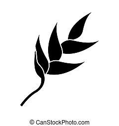 exotique, heliconia, naturel, pictogramme