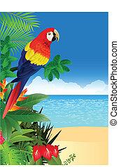 exotique, macaw, plage, backgroun