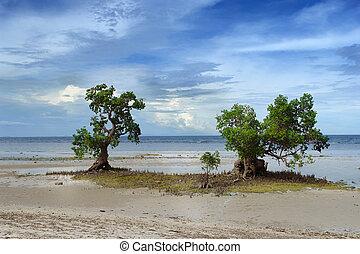 exotique, mangrove, plage, deux, arbres