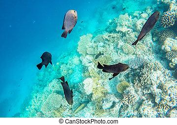 exotique, marin, maldives, vie