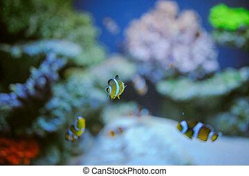 exotique, mer, corail, life:, exotique, récif
