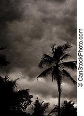 exotique, mousson, ciel, orageux