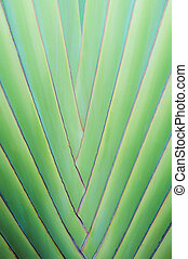exotique, palmier, haut fin