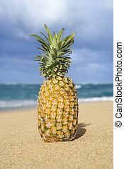 exotique, plage., ananas