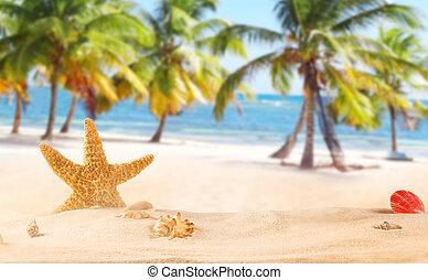exotique, plage., etoile mer