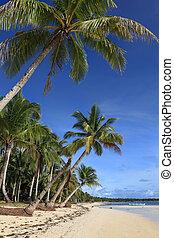 exotique, plage paume, arbres