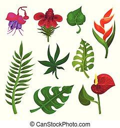 exotique, plat, ensemble, nature, promo, affiche, livre, leaves., theme., vecteur, divers, aviateur, vert, fleurs, botanique, ou, éléments