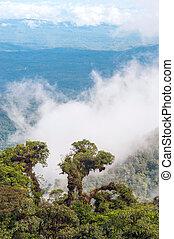 exotique, rainforest, andes, amazone, équateur, vue