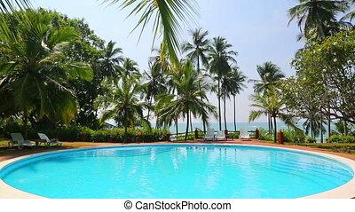 exotique, recours, piscine, paumes, natation