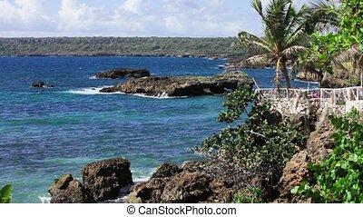 exotique, rivage, palmiers