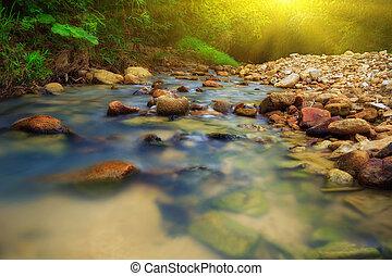exotique, rivière, jungle