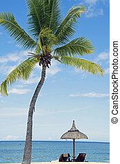 exotique, sable blanc, plage, à, noix coco, arbres