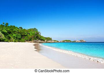 exotique, sable blanc, plage, à, palmiers