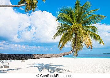 exotique, sable blanc, plage, à, paume