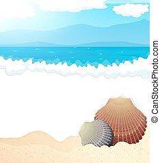 exotique, seashells, plage