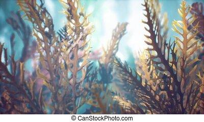 exotique, soft-hard, sous-marin, coloré, coraux, marine