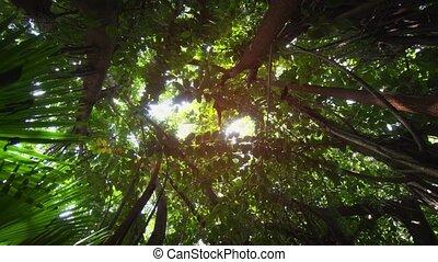 exotique, soleil, île maurice, ombragé, végétation