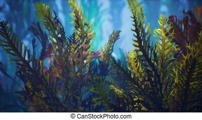 exotique, sous-marin, coloré, soft-hard, coraux, marine
