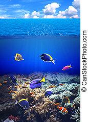 exotique, sous-marin,  fish,  scène