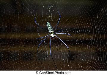 exotique, toile, araignés