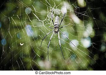 exotique, toile, grand, araignés