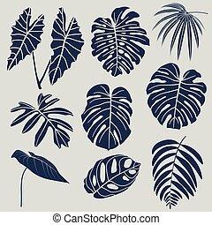 exotique, vecteur, ensemble, leaves.