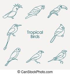 exotique, vecteur, oiseaux, illustration, icône