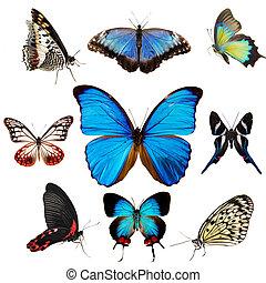 exotische , sammlung, vlinders
