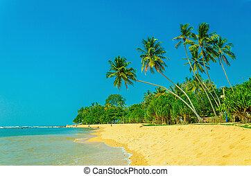 exotische , sandiger strand, mit, hoch, palmen
