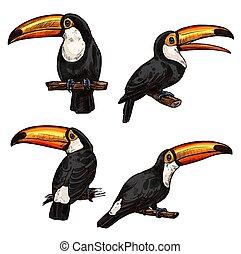 exotische , set, toucan, vogel