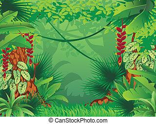 exotische , tropischer wald