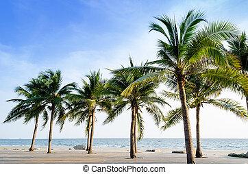 exotisk, vacker, och, avskild, strand, med, palmträdar