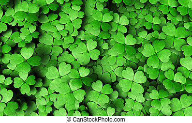 Expanse Of Four Leaf Clovers