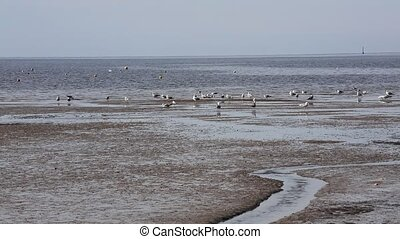 expanse of seagulls on the beach by the sea