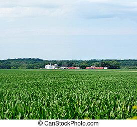 expansive corn field with farm scene