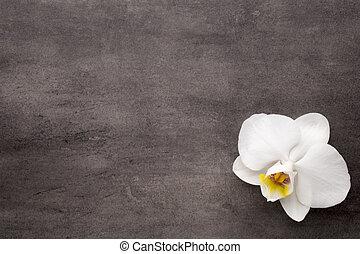 experiência., branca, cinzento, orquídea