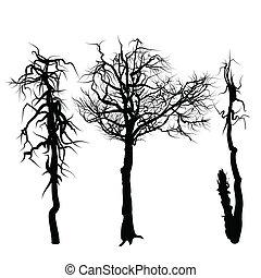 experiência., branca, isolado, árvores