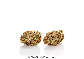 experiência., branca, marijuana, broto, isolado