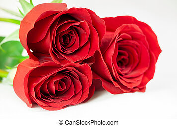 experiência., branca, três, rosas vermelhas