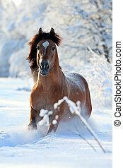 experiência., cavalo, corridas, inverno