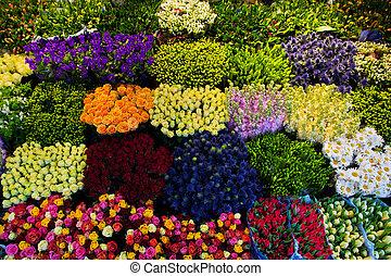 experiência., flores, coloridos