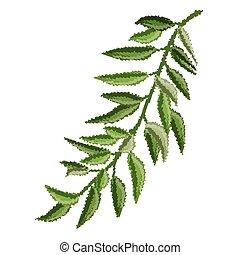 experiência., folhas, verde branco, ramo