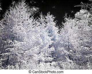 experiência., fotografia, larch, céu, infravermelho