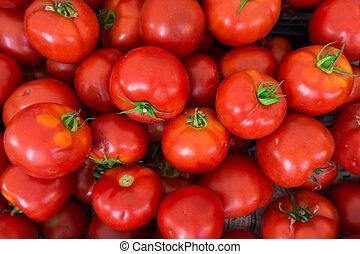 experiência., grupo, tomates vermelhos